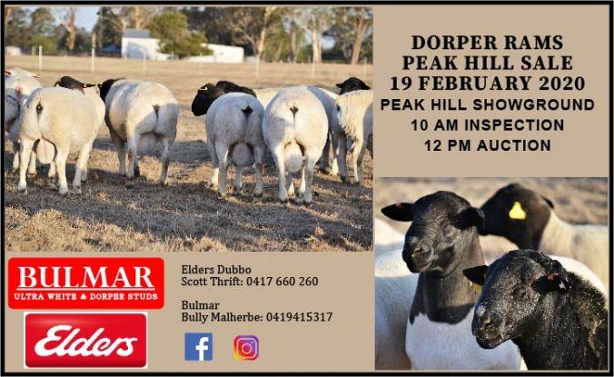 Dorpers Flyer 01